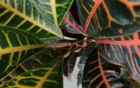 如何在这个冬天拯救你的植物免于死亡