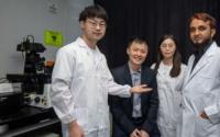 研究人员创造了一种仿生机器人可以模仿射线精子的游泳运动