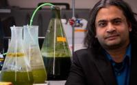 犹他大学研究人员创造了一种更快的制造生物原油燃料的方法